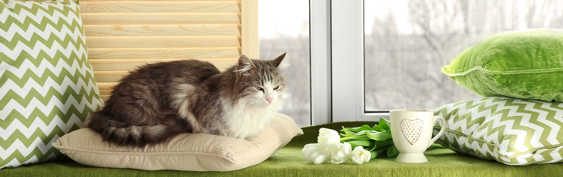 catalog/site images/cushions_cat.jpg